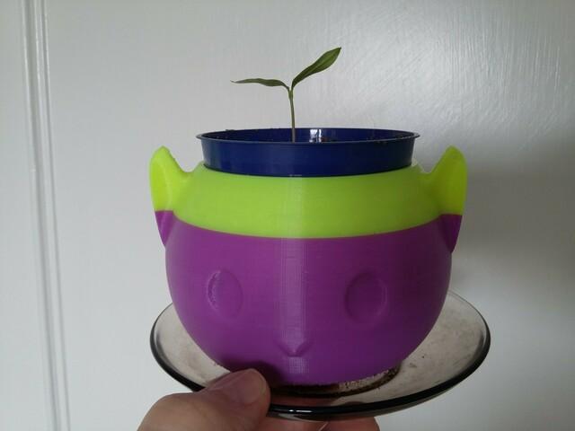 Bulgarian Chilli seedling in cat pot